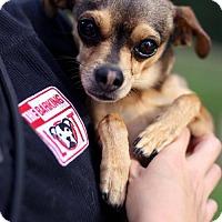Adopt A Pet :: Gillingham - San Diego, CA