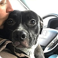 Adopt A Pet :: Remy - Chicago, IL