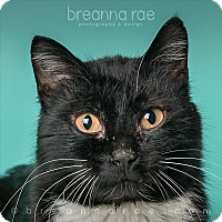 Adopt A Pet :: Riley - Sheboygan, WI