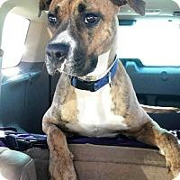 Adopt A Pet :: Roxanne-2-19Update pix& bio - Turnersville, NJ
