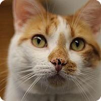 Adopt A Pet :: Bert - El Cajon, CA