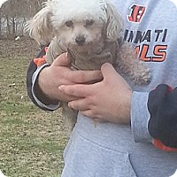 Adopt A Pet :: Spanky - Northumberland, ON