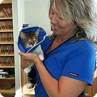 Adopt A Pet :: Boo - Harrisburg, NC