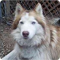 Adopt A Pet :: Fergie - Belleville, MI
