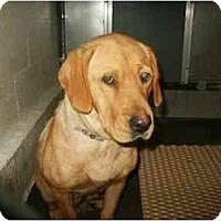 Adopt A Pet :: Roxanna - Cumming, GA