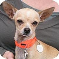 Adopt A Pet :: Basil - Santa Monica, CA