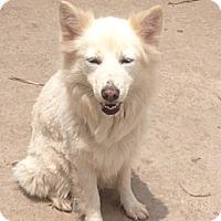 Adopt A Pet :: Blanca - McAllen, TX