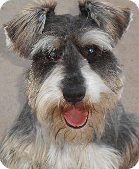 Chula Vista Dog Adoption