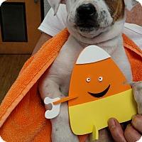 Adopt A Pet :: Aldrin - Charlemont, MA