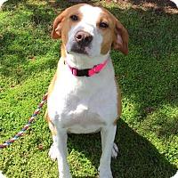 Adopt A Pet :: Jesse - Irmo, SC