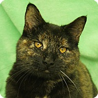 Adopt A Pet :: Bee - Colorado Springs, CO