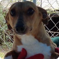 Adopt A Pet :: Jesse - Crump, TN