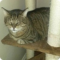 Adopt A Pet :: Rocki - Brampton, ON