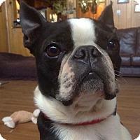 Adopt A Pet :: Obie (rbf) - Hagerstown, MD