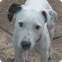Adopt A Pet :: Miss Molly~ Excellent! - St Petersburg, FL