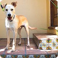 Adopt A Pet :: Lennon - Los Angeles, CA