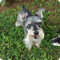 Adopt A Pet :: Jager - Harrisonburg, VA