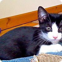 Adopt A Pet :: Gigi - Middletown, NY