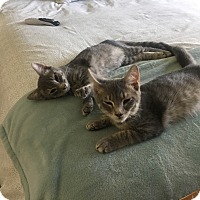 Adopt A Pet :: Jackson/Sawyer - Apex, NC