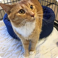 Adopt A Pet :: PJ - Menands, NY