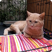 Adopt A Pet :: Ralph - Brooklyn, NY
