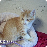 Adopt A Pet :: Olly-Coming Soon! - Bridgeton, MO