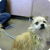 Adopt A Pet :: *HAROLD - Sacramento, CA