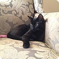 Adopt A Pet :: Alice - Raritan, NJ