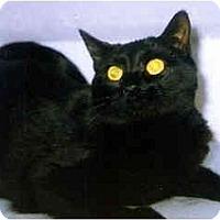 Adopt A Pet :: Artemis - Medway, MA