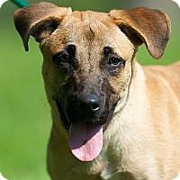 Adopt A Pet :: Charlie - Providence, RI