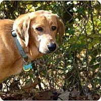 Adopt A Pet :: PREWITT - Hagerstown, MD
