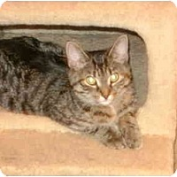Adopt A Pet :: Adaline(Jabez) - Etobicoke, ON