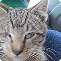 Adopt A Pet :: Nicholas - Riverside, RI