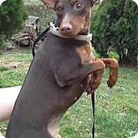 Adopt A Pet :: Penny - Hazard, KY
