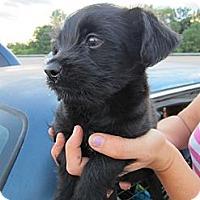 Adopt A Pet :: Galice-Adopted! - Glastonbury, CT