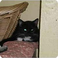Adopt A Pet :: Mira - Lombard, IL