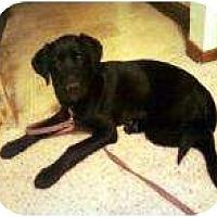 Adopt A Pet :: Boomer - Palmyra, WI