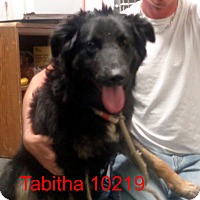 Adopt A Pet :: Tabitha - baltimore, MD