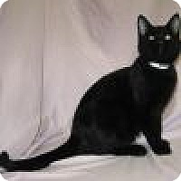 Adopt A Pet :: Romulus - Powell, OH