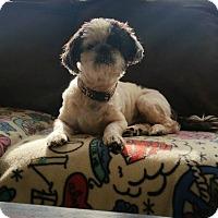 Adopt A Pet :: Archie - Davison, MI
