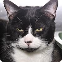 Adopt A Pet :: Jack - Middletown, CT