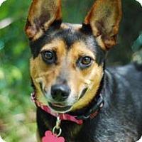 Adopt A Pet :: Kitty - Miami, FL