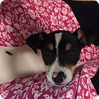 Adopt A Pet :: Tinsley - Alpharetta, GA