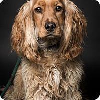 Adopt A Pet :: Tonka - Santa Barbara, CA