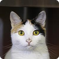 Adopt A Pet :: Buttercup - Sarasota, FL