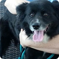 Adopt A Pet :: Lucas - Ocean Ridge, FL