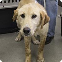 Adopt A Pet :: Kelsey - Washington, DC