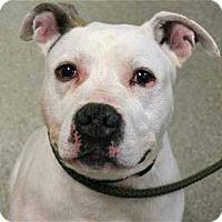 Adopt A Pet :: Huel Perkins - Troy, MI