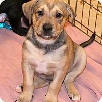 Adopt A Pet :: Thor - Towson, MD