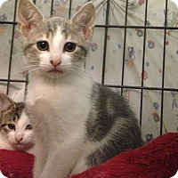 Adopt A Pet :: Star - East Brunswick, NJ